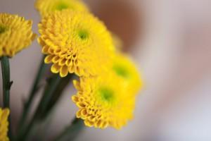 progetto_carta_fiori